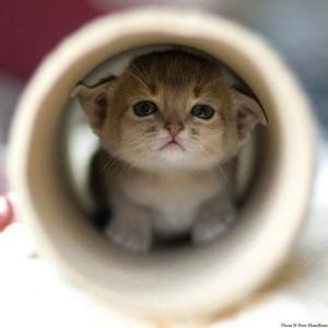 ijedt cica